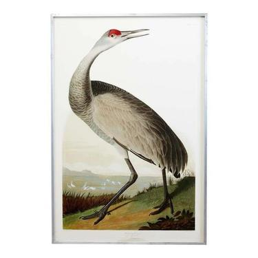 Audubon Hooping Crane Plate #261 Havell Oppenheimer Edition by ErinLaneEstate