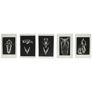 Set of Five X-Rayed Animal Skull Prints by ErinLaneEstate