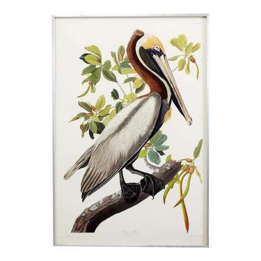 John James Audubon Brown Pelican Plate #251 Havell Oppenheimer Edition by ErinLaneEstate