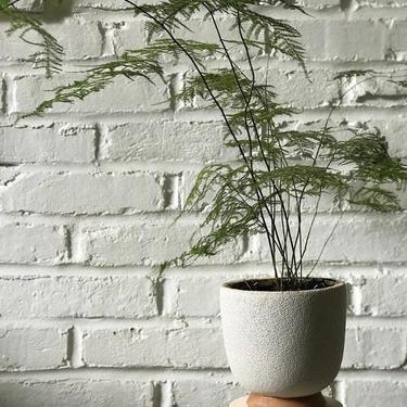 Custom Plant Stands by OlivrStudio