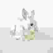 Silver Plate Bunny Bank