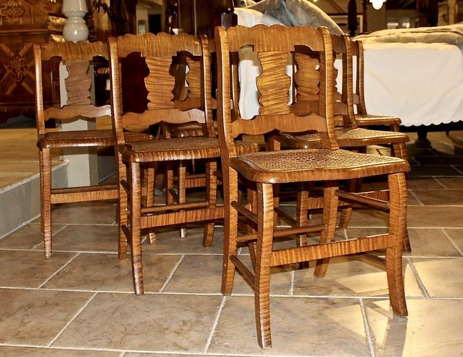 Set of 6 Saber Leg Chairs in Tiger Maple, 19th Century