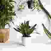 """7.5"""" Pot/Planter-White Bell"""