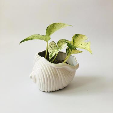 Vintage Ceramic Shell Planter by SergeantSailor