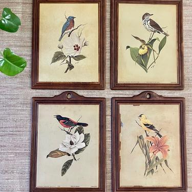 Vintage Bird Art - Arthur A. Kaplan & Co. Lithograph on Wood - Oriole - Goldfinch - Blue Bird - Wood Thrush - Set of Four -Wood Plaque Frame by SoulfulVintage