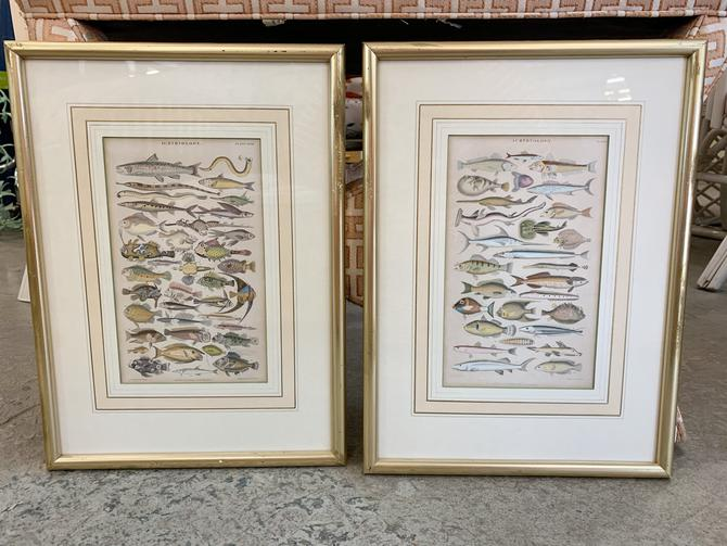 Pair of Fish Ichthyology Plate Prints