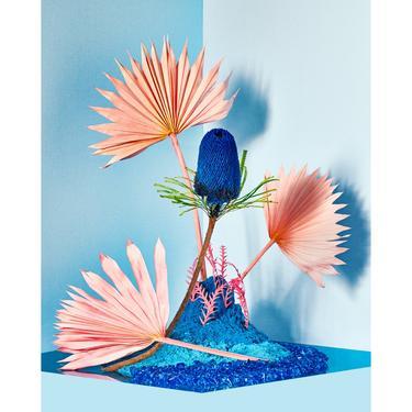 Blue Lagoon: Still Life Photo, Flower Art, Floral, Modern Art, Abstract Art, Conceptual Art, Home Decor (Limited Edition Print of 50). by DesireePfeifferPhoto