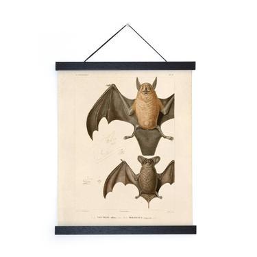 Curious Bat Wall Art