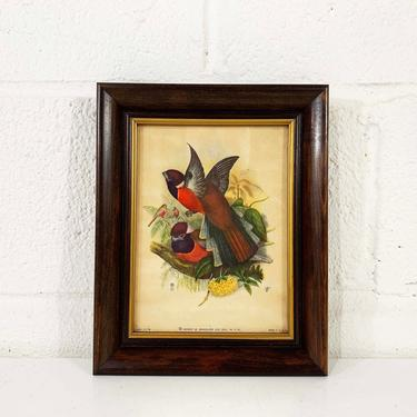 Vintage Birds Lithograph Henry B. Sandler Framed No 1176 Rare Wood Frame Painted Litho Print Bird Bohemian 1940s 40s Antique Boho USA NYC by CheckEngineVintage