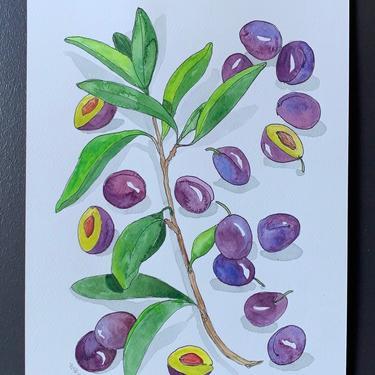 Damson Plum Original Watercolor Painting