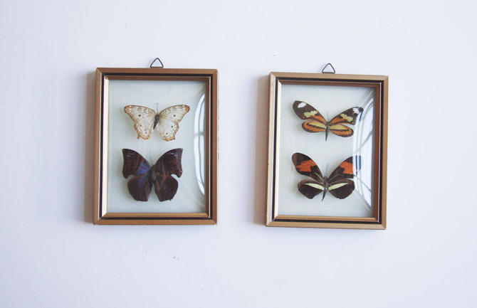 Vintage Butterfly Artwork-Vintage real Butterfly-Four Unique ...