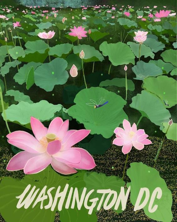 Lotus Flowers at the Kenilworth Gardens [#111]