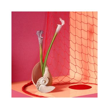 Still Life With Seashell & Net: Fine Art Photography, Abstract Art, Flower Print, Still Life. Interior Design, Seashell Art. by DesireePfeifferPhoto