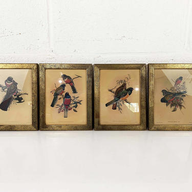 Vintage Set of 4 Framed J. Gould & W. Hart Rare Birds Lithograph Prints Wood Frame Painted Litho Print Bird Bohemian 1940s 40s Antique Boho by CheckEngineVintage