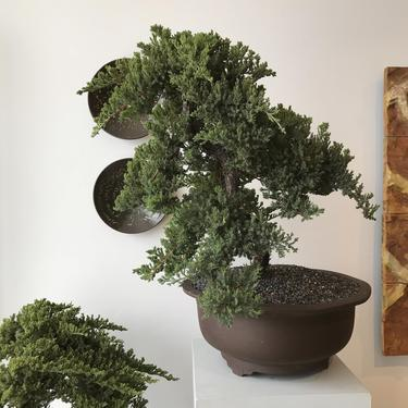 Pair Chinese Ceramic Planters with Juniper Trees