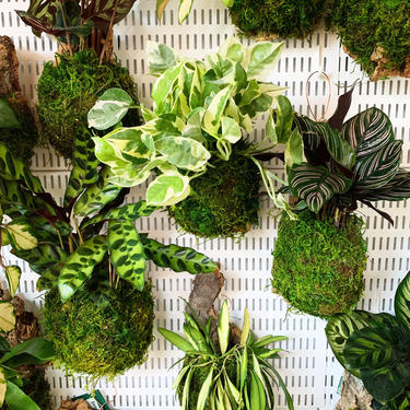 Mounted Tropical Plants by JungleandLoom