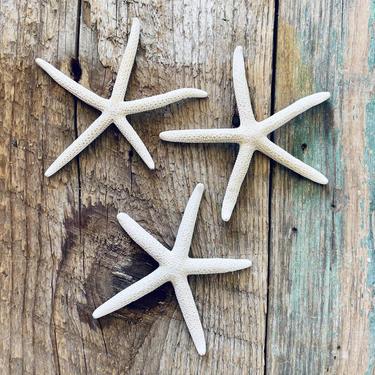 Starfish Set of 3   Ocean Decor   Sea Decor   Seashell Decor   Nautical Decor   Natural Decor   Beach Decor   Collection   Display   Bath by PiccadillyPrairie