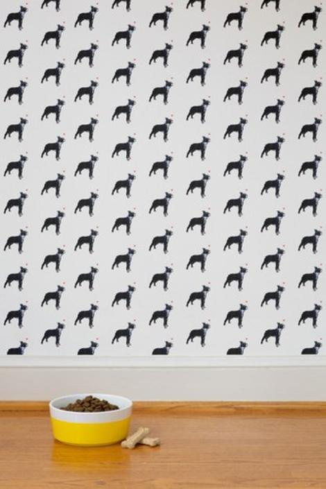 Ms. Boston Terrier Wallpaper