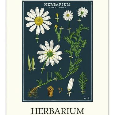 Herbarium Wall Calendar