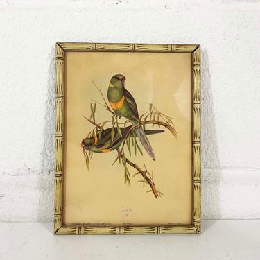 Vintage Rare Birds Framed Lithograph Audobon J. Gould Parrots Birds London Litho Print Bird Bohemian 1940s 40s Antique Boho by CheckEngineVintage
