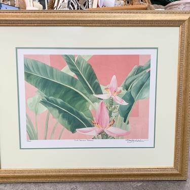 Pink Banana Blooms by Jennifer Ardolino