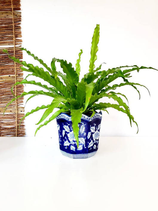 Vintage Blue & White Floral Chinoiserie Cache Pot Planter by pennyportland