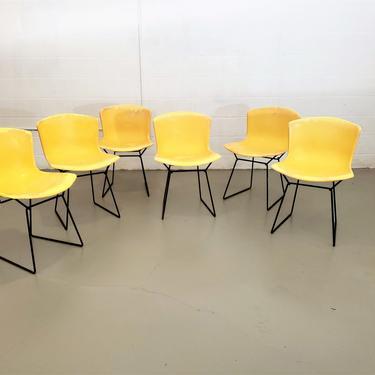 Mid Century Set of Six Harry Bertoia for Knoll Fiberglass Shell Chairs by ProRefineFurnishings