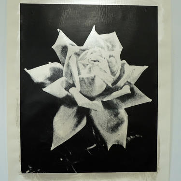 Large Silver Rose Acrylic on Drawing Paper (signed) (Copy)