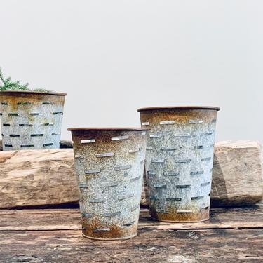 Galvanized Planter Vase Olive Bucket by PiccadillyPrairie