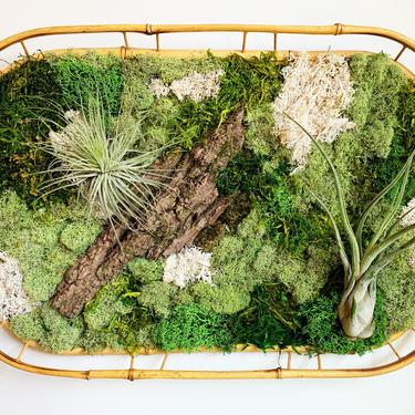 Moss Wall with Living Airplants by JungleandLoom