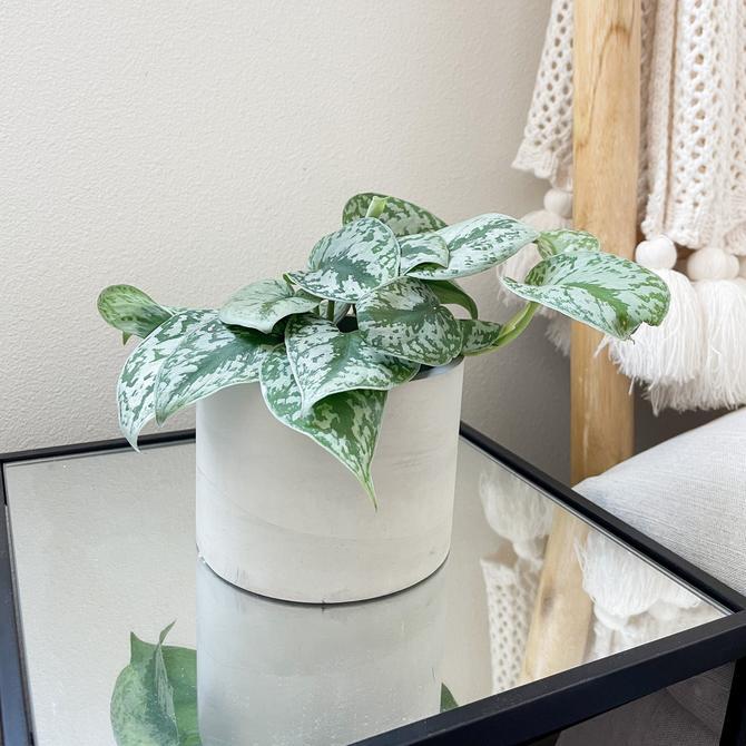 Simplistic Concrete Planter / Concrete pot / Concrete flower pot / Indoor plant pot / Cement planter / Drainage hole included by SundayStudioOC