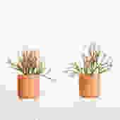 Potted Pencil Cactus