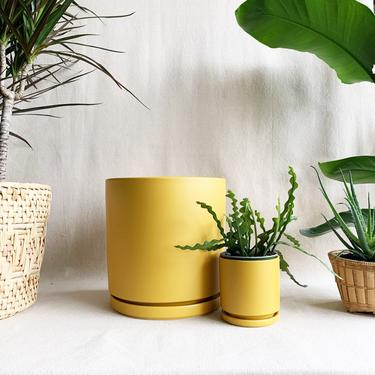 """4"""" Cylinder Pot and Saucer in Mustard"""