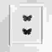 Framed Darwin Butterfly Set