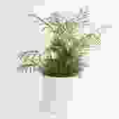 "8"" Pot / Planter - Matte White Cylinder"