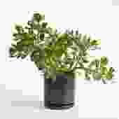 assorted jade (Package B)