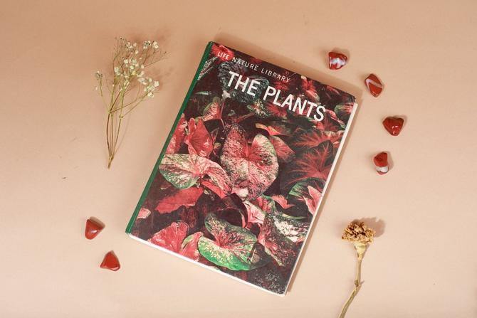 Vintage Reclaimed Repurposed Handbound Book Watercolor Sketchbook - The Plants Life Nature Library by AppleBranchesVintage