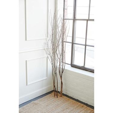 Colossal Birch-Branch Bundle