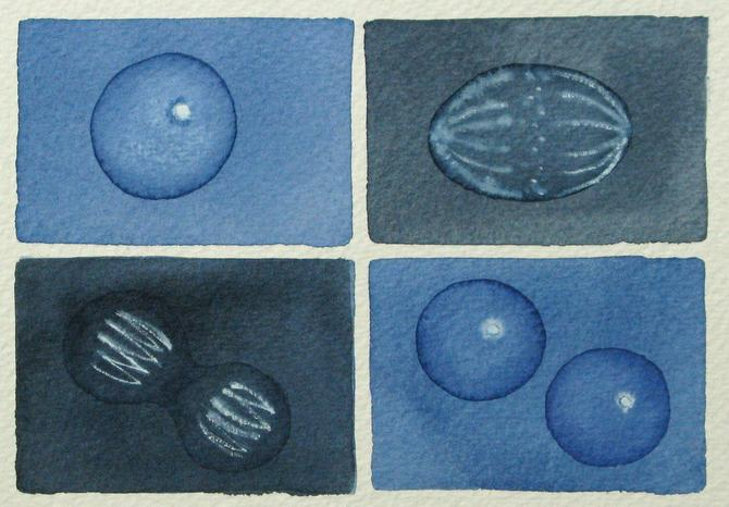 Dark Blue Mini Mitosis  - original watercolor painting - cell cycle by artologica
