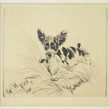 1930's Diana Thorne Original Etching King Charles Spaniel Dog Retrieving Pheasant Sgnd by PrairielandArt