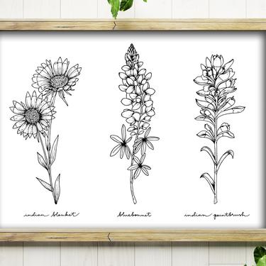 Art Print // Wildflowers Trio // 5x7 + 8x10 Hand Drawn Floral Illustration // Bluebonnet, Indian Blanket, Indian Paintbrush by BillieClaireHandmade