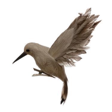 Hummingbird in Flight Clip