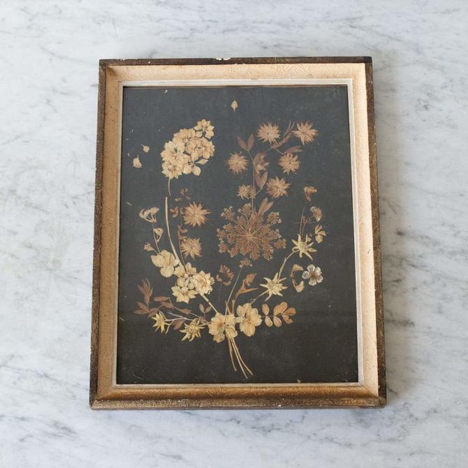 Framed Pressed Botanicals on Black