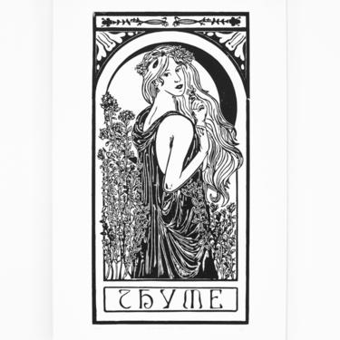 Thyme | Herb Nouveau