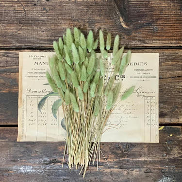 Dried Bunny Grass   Dried Flowers   Dried Branches   Vase Filler   Green   Botanical   Plant   Floral   Centerpiece   Preserved   Grasses by PiccadillyPrairie
