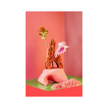 Still Life With Seashell & Flower: Fine Art Photography, Still Life, Abstract Flower, Floral, Seashell, Interior Design, Home Decor. by DesireePfeifferPhoto