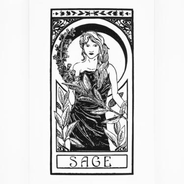 Sage | Herb Nouveau