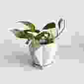 "4.25"" Pot/Planter-Geometric Shape with Saucer"